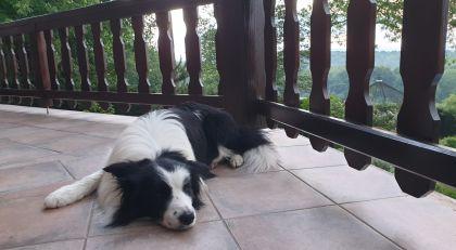 hondenvakantie in villa faro durbuy